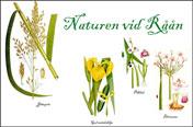 Länk till natur vid Råån
