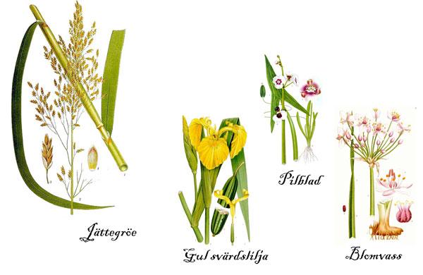 bilder växter