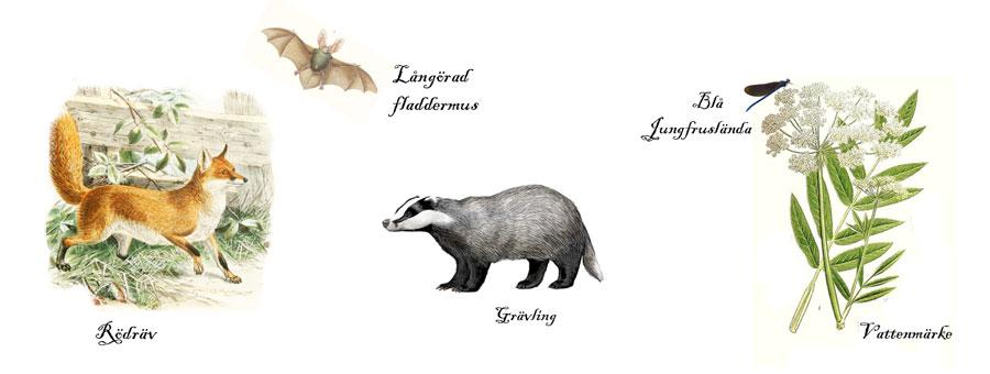bilder växter och djur